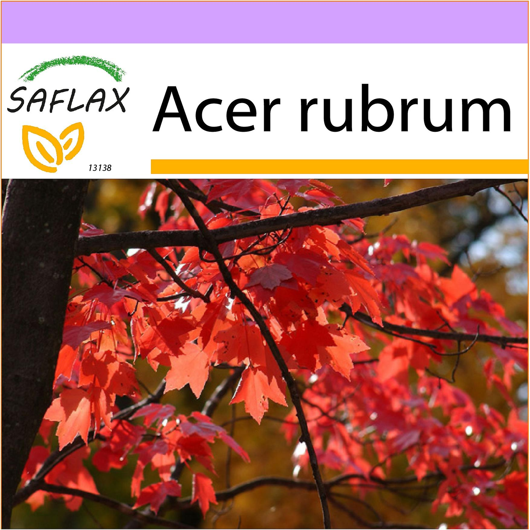 Saflax 20 Seeds Red Maple Erable Rouge Acero Rosso Arce