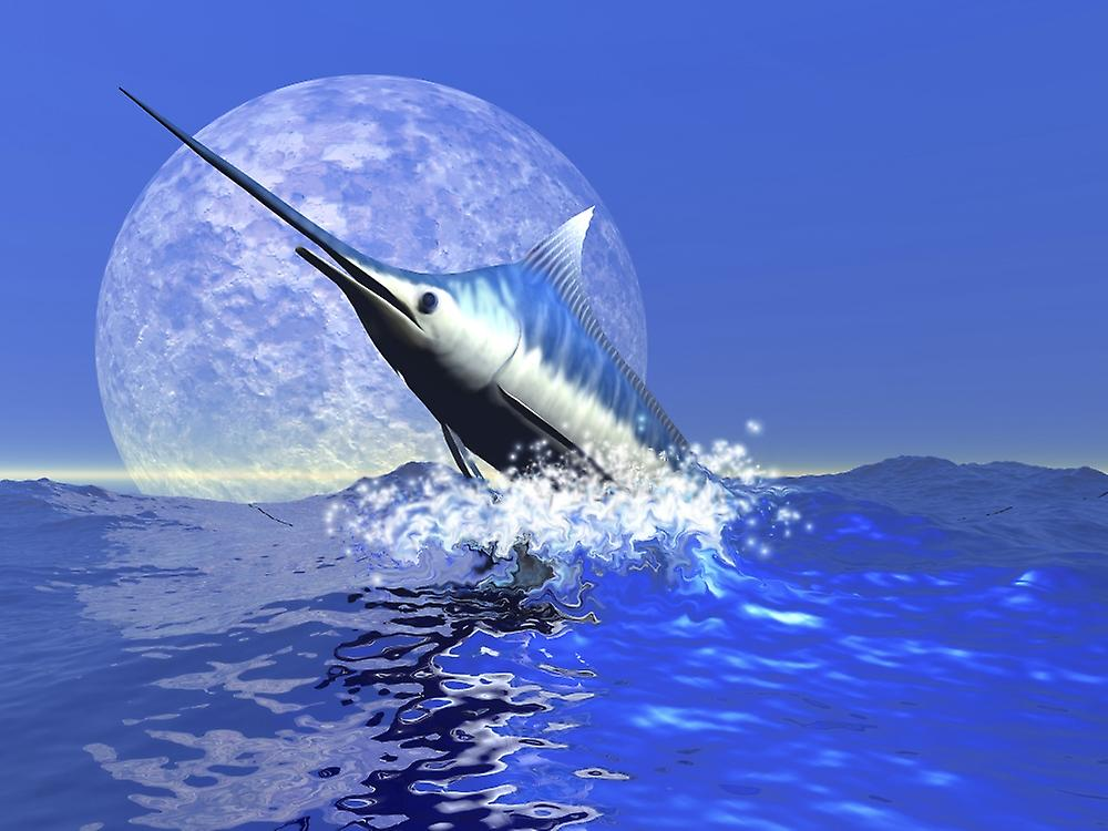 blue marlin research paper
