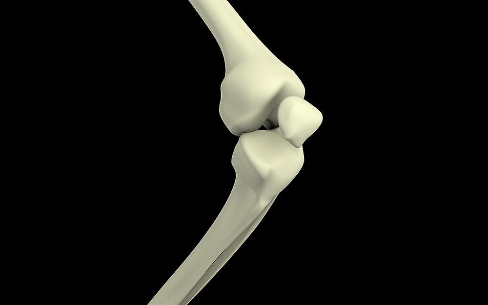 Illustration Of Knee Bone Bending Poster Print Fruugo