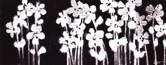 White Flowers On Black I Poster Print By Norman Wyatt Jr 20 X 8