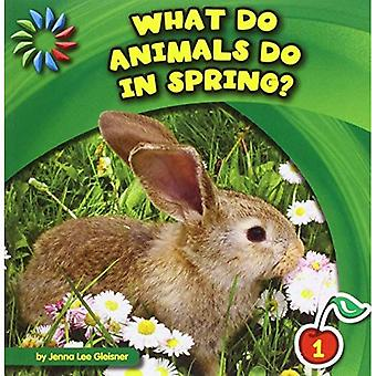What Do Animals Do in Spring? (21st Century Basic Skills Library: Let's Look at Spring)