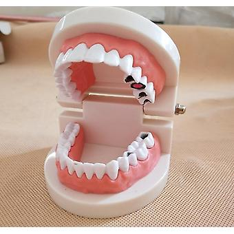 Dental implantat undervisning studie tenner modell