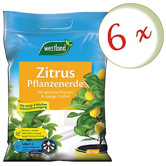 Sparset : 6 x WESTLAND® agrumes terre, 8 litres