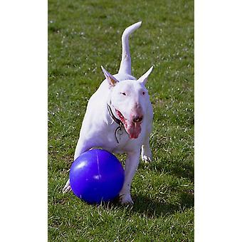 Compagnie des animaux chienne jouet BOOMER BALL