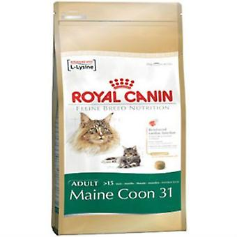 Royal Canin Adult Cat kompletny pokarm dla Maine Coon 31 (4Kg)