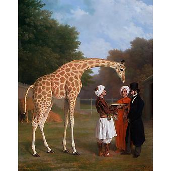 The Nuian Giraffe, Jacques-Laurent Agasse, 50x40cm