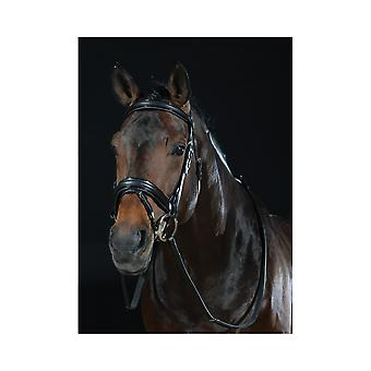 Collegiate Padded Headpiece Patent Flash Bridle - Black
