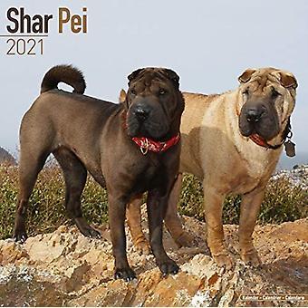 Shar Pei 2021 Wandkalender von Erstellt von Avonside Publishing Ltd