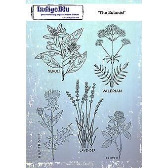 IndigoBlu The Botanist A5 Rubber Stamp