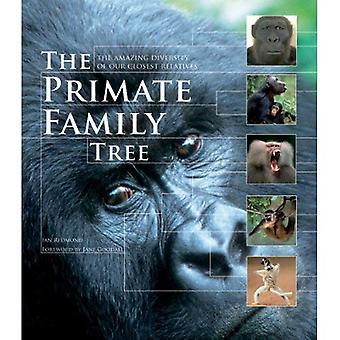 De Primate stamboom: De verbazingwekkende diversiteit van onze naaste verwanten