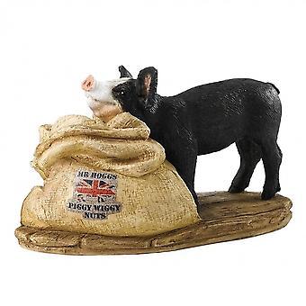 Border Fine Arts heer Hoggs Piggy Wiggy noten-varken beeldje