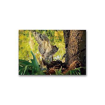 Landing Oppdaget Eagle Owl Poster -Bilde av Shutterstock