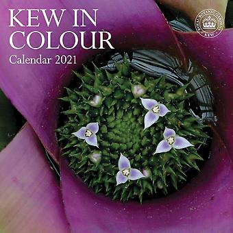 Otter House 2021 Wall Calendar - Kew In Colour