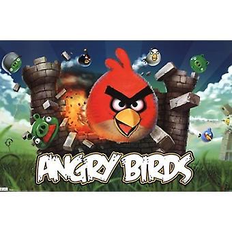 طباعة ملصق غاضبون الطيور