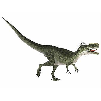 Monolophosaurus is a carnivorous theropod dinosaur that lived during the Jurassic period of China Poster Print