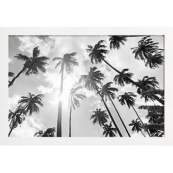 JUNIQE Print - Palm Grove - Palm Trees Poster in Grey & Black