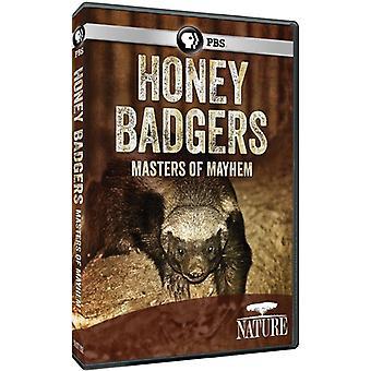 自然: 蜂蜜アナグマ: 騒乱マスター 【 DVD 】 USA 輸入