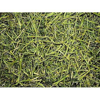 Ystävällinen ReadiGrass Alfalfa pieni lemmikkieläinten ruoka