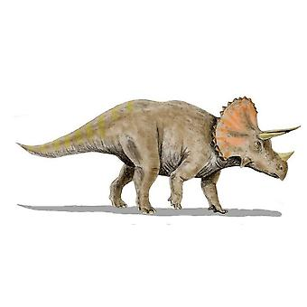 Sticker Sticker Dinosaur Dino Jurassic Deco Child Triceratops Room