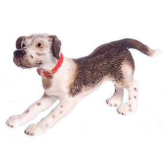 Dolls House amerikkalainen englanti coonhound falcon miniatyyri lemmikki coon koira