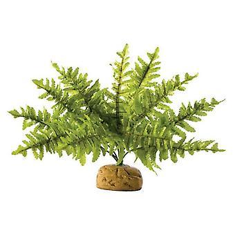 إكسو تيرا بوسطن السرخس Terrarium النبات -- الصغيرة -- 1 العد