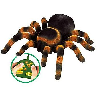 Spider Tarantula RC scale model for beginners Arachnid