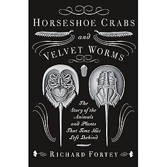 Caranguejos-ferradura e sem-fins de veludo: A história dos animais e plantas que tempo tem deixado para trás