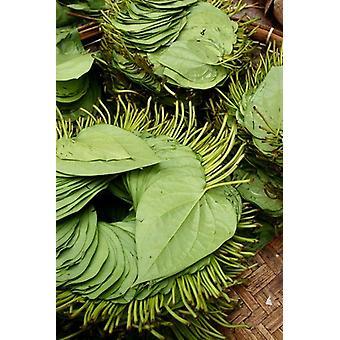 キンマの葉ジェイ Sturdevant ミャンマー市場ポスター印刷で販売の金回りのために使用