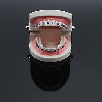مختبر طب الأسنان تعليم دراسة معيار Typodont نموذج الأسنان مظاهرة مع
