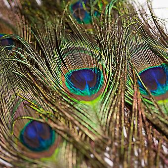 Peacock feathers 15 piece natural length 80 cm