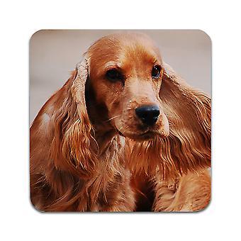 2 תחתיות כלבים קוקר ספניאל