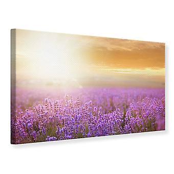 Canvas Print zonsondergang In Lavendel veld