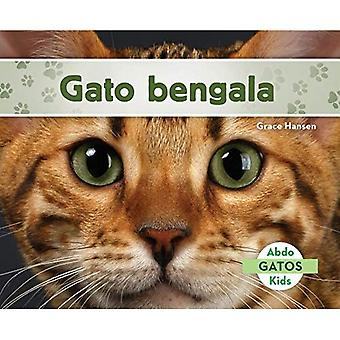 Gato Bengala (chats Bengal) (Gatos (chats ensemble 2))