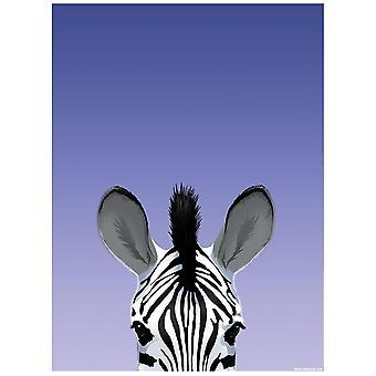Inquisitive Creatures Zebra Poster