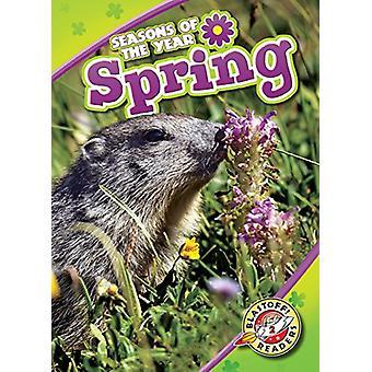 Spring by Rebecca Pettiford - 9781626177611 Book