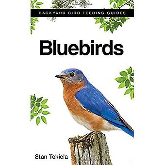 Merle-bleu (Backyard Bird alimentation Guides)
