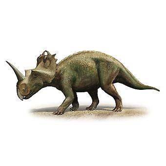 Centrosaurus apertus a prehistoric era dinosaur from the Late Cretaceous period Poster Print