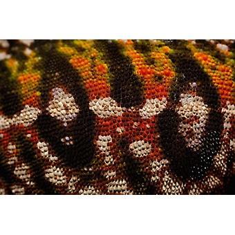 Jewel chameleon skin lizard MADAGASCAR Poster Print by Pete Oxford