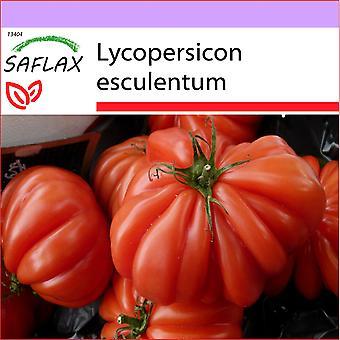 Saflax - 10 semi - pomodoro - Costoluto Genovese - Tomate Costoluto Genovese - Pomodoro Costoluto Genovese - Tomate - Costoluto Genovese - Tomate - Costoluto Genovese