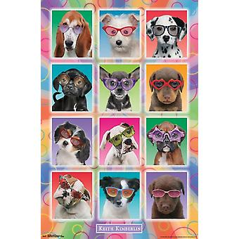 Puppies - Sunglasses Poster Poster Print