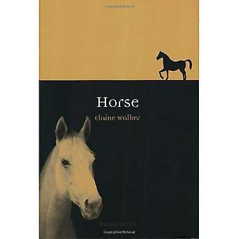 Pferd (Tier)
