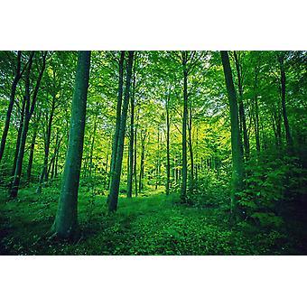 Tapeta Mural Leśne liście w zielonych kolorach na wiosnę