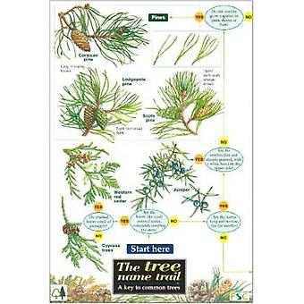 Tree Name Trail - A Key to Common Trees by Jonathan Oldham - Carol Rob