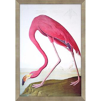 Flamingo coastal style by paragon