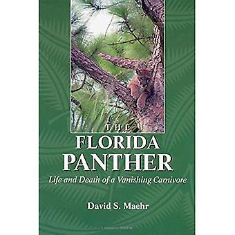 La Pantera della Florida: Vita e morte di un carnivoro fuoco prospettico