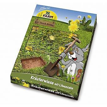 Jr Farm  Herb-Meadow with Dandelion (Small pets , Treats)