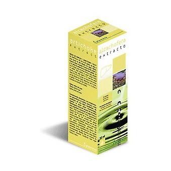 Artichoke Extract 50 ml