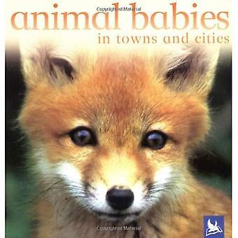 Djur bebisar i städer