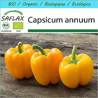 Saflax - Gift Set - 20 seeds - Organic - Sweet Pepper - Golden California Wonder - BIO - Poivron - California wonder - Jaune - BIO - Peperone - Golden California Wonder - Ecológico - Pimiento - Maravilla dorada de California - Paprika - Golden California Wonder
