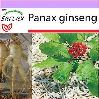 Saflax - 10 זרעים - ג'ינסנג קוריאני - ג'ינסנג קורן - ג'ינסנג - ג'ינסנג ג'נוינו קורנו - אכטר קוריאנישר ג'ינסנג